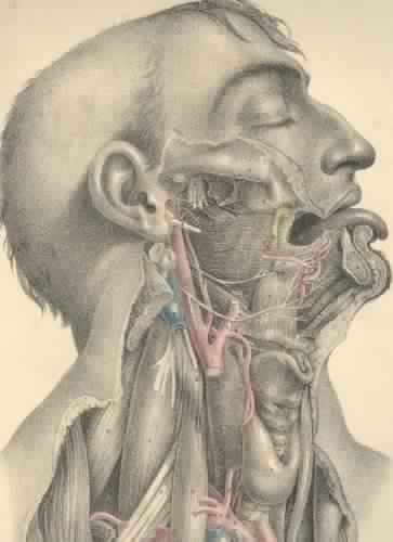 Surgical Anatomy | Get link to download free books legally
